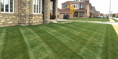 Lawn care and landscape services - Ditta & Sons