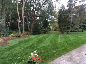 Lawn with weed control